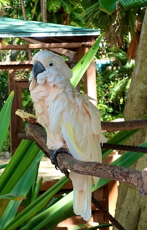 White Parrot+6.11.14.14