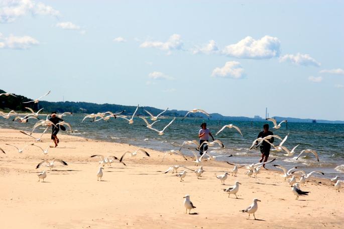 Chasing Sea Gulls