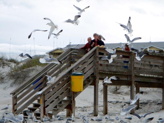 Daytona Shores. Feeding Sea gulls