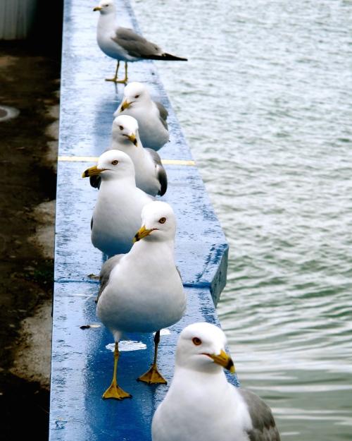 Mackinac Island Seagull line