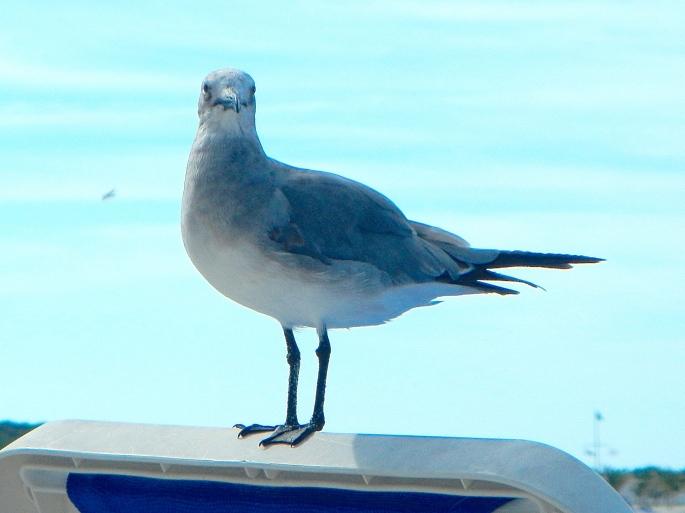 Profile of sea gull