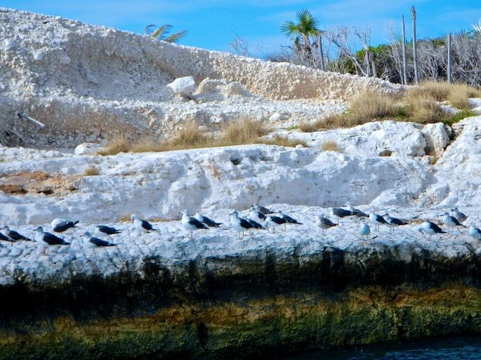 Sea gull colony