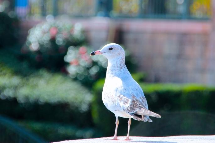 Sea gull. Epcot