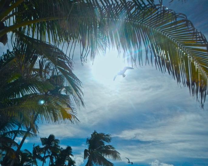 Sea gull in the tropic sun