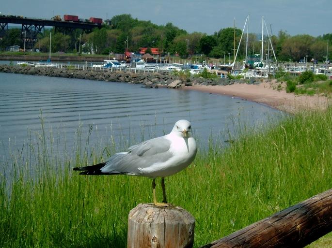 Sea Gull, Marquette