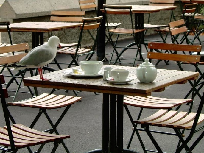 Sea Gull out for lunch