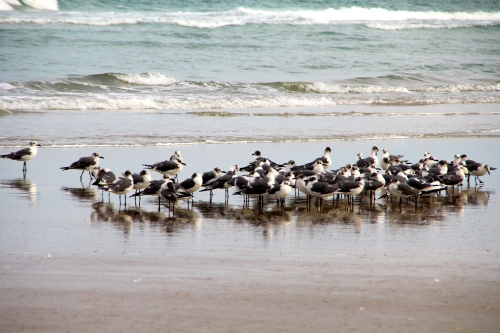 Sea gulls on beach