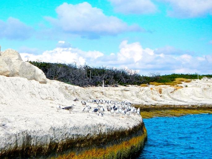 Sea gulls on ledge