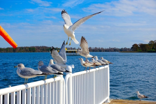 Sea gulls waiting for boat