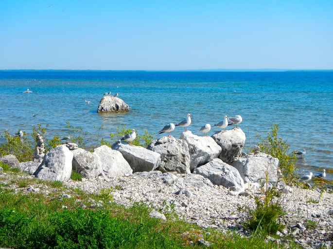 Seagull on every rock 6.7.14