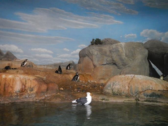 Seagull + Penguins 8.28.14 copy