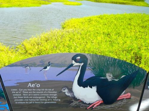 Ae'o Birds