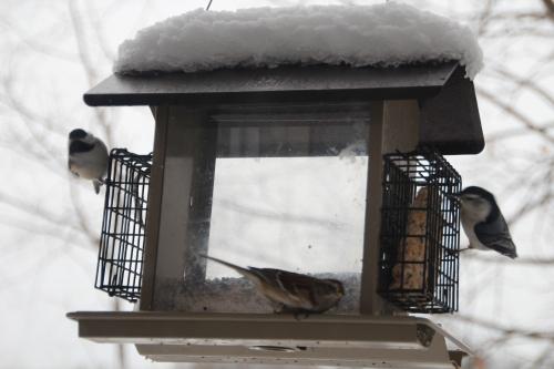 Birds at Feeder 1.10.14