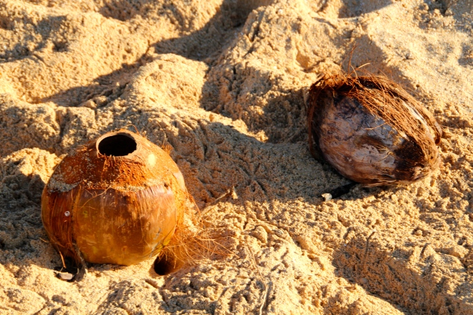 Coconuts on Big Beach