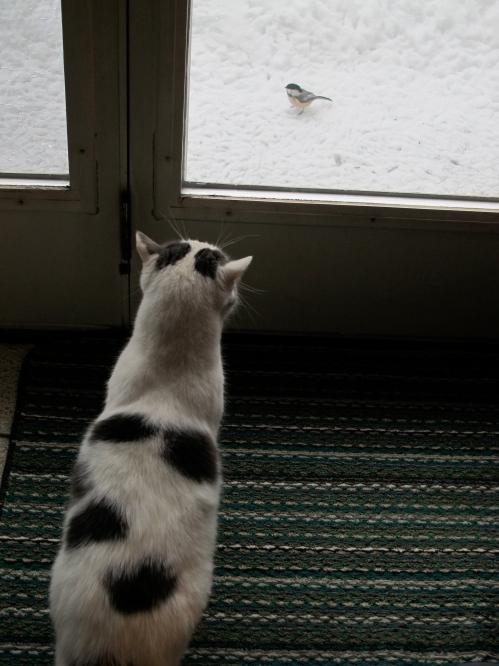 Davy Bird Watching