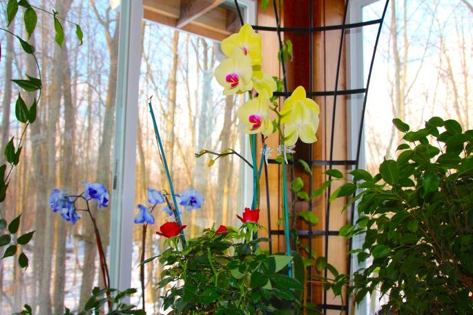 Garden Room 2012 Winter copy