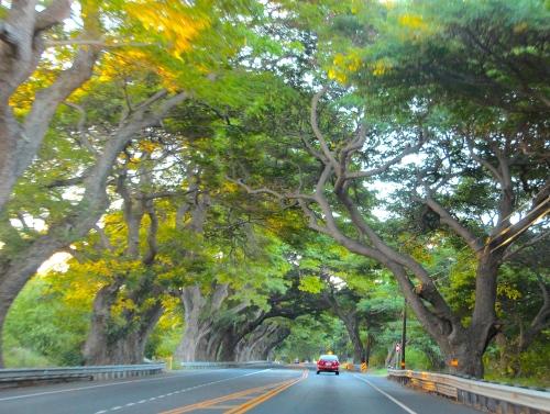 Highway 31, Maui