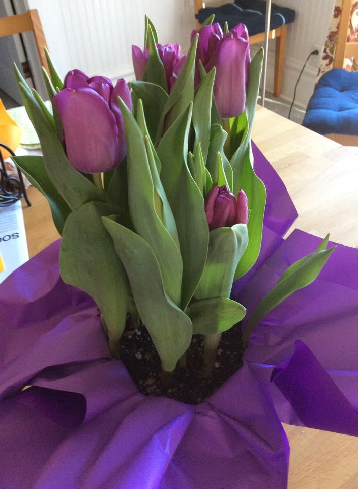 Purple Tulips from Jon to Linda 2.14.15
