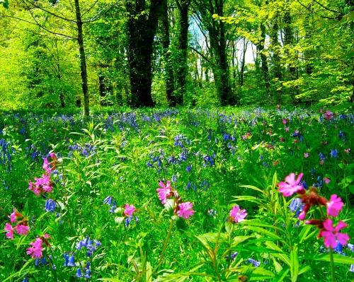 Woodland Garden, Lanhydrock, UK