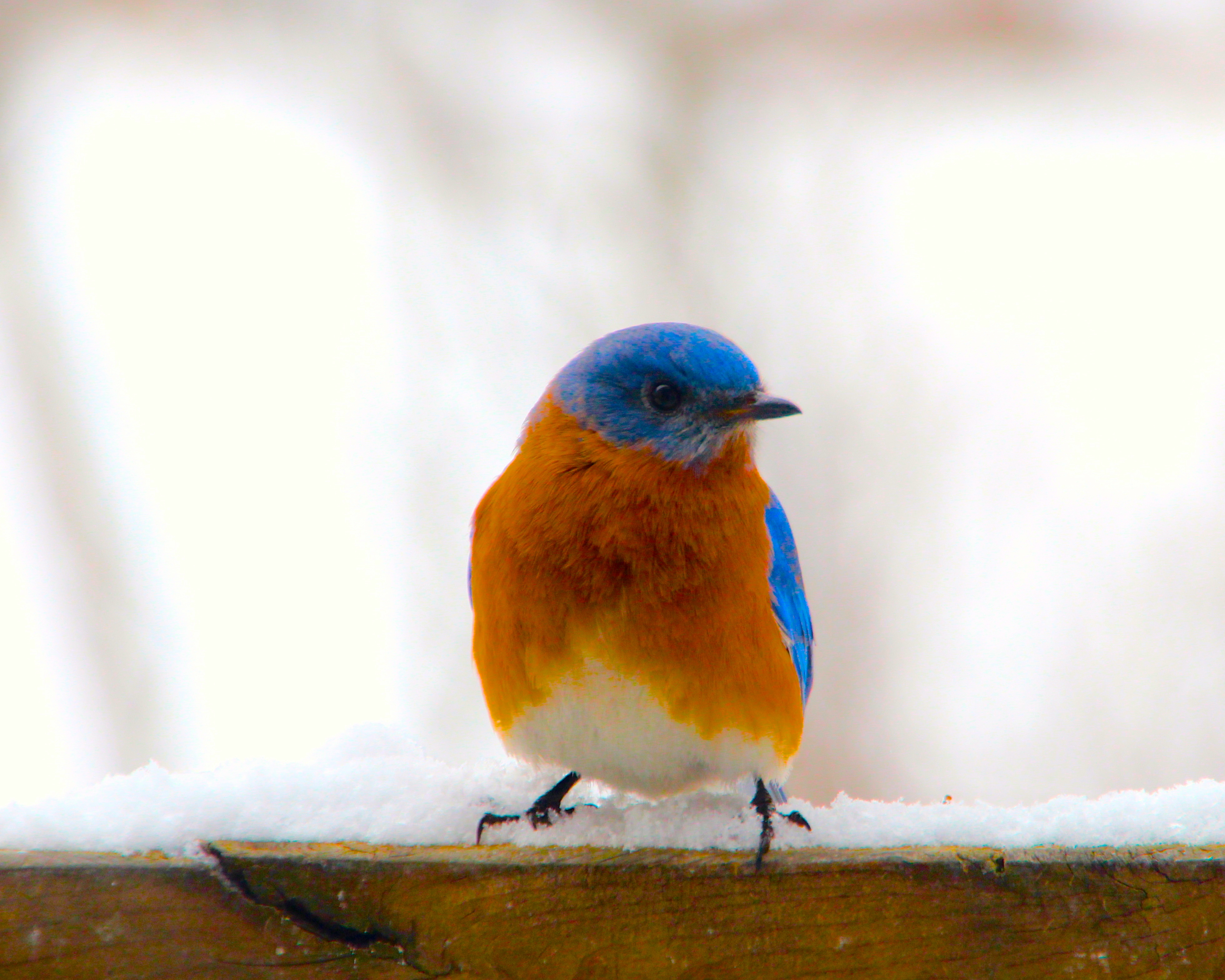 110 Bluebird