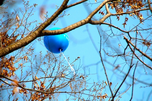 Balloon tangled in treetops