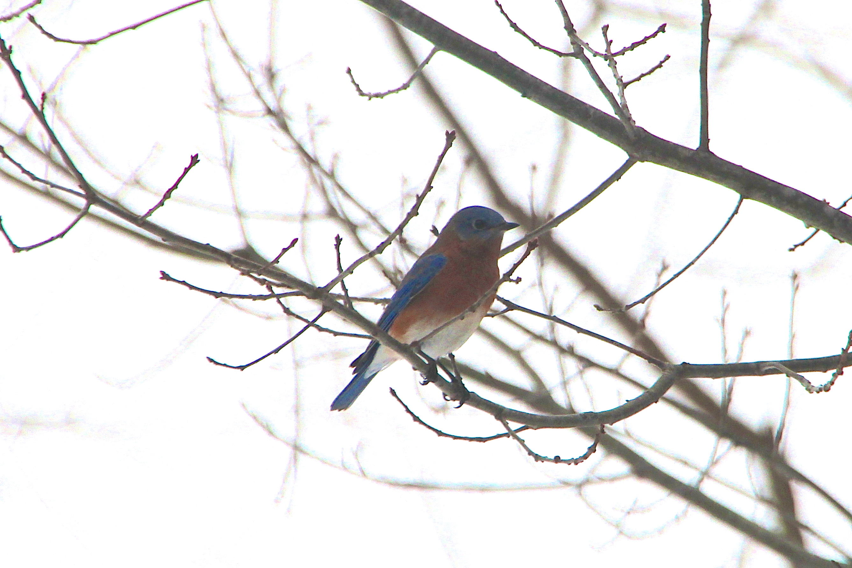 Bluebird 1.10.14