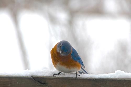 Bluebird 2.13.14