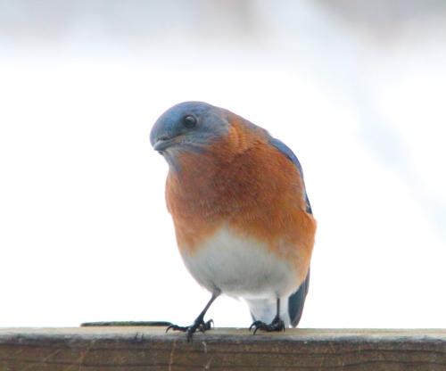 Bluebird+30 1.10.14