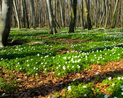 fairy-land-forest-floor