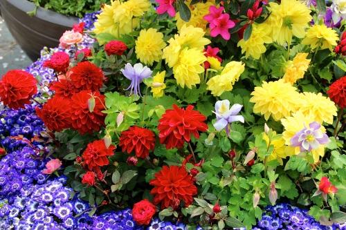 Garden in a pot. S. Korea 4.8.14 copy