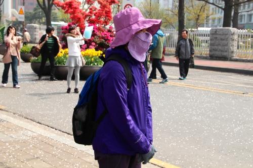 Koreans at Cherry Blossom Festival 3