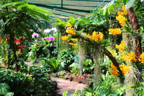 National Orchid Garden. Singapore