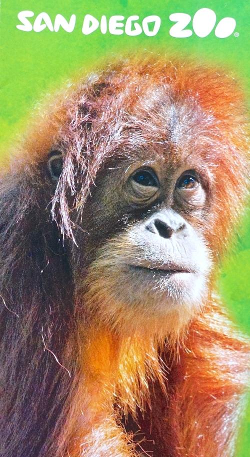 Orangutan from brochure