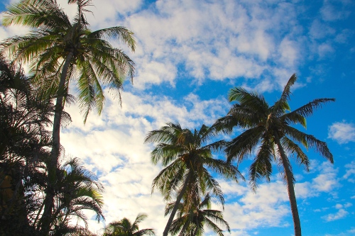 Palm trees in sunshine