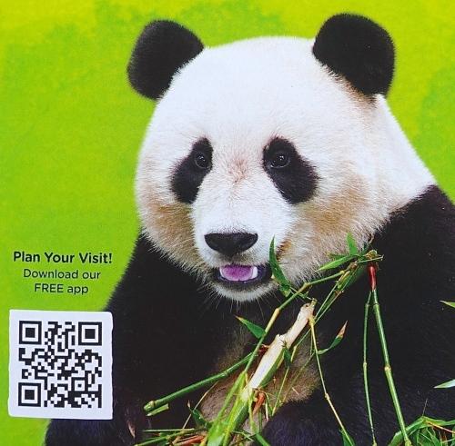 Panda from Brochure