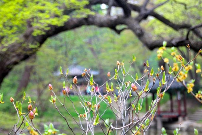 Secret Garden of Changdeokgung Palace 10