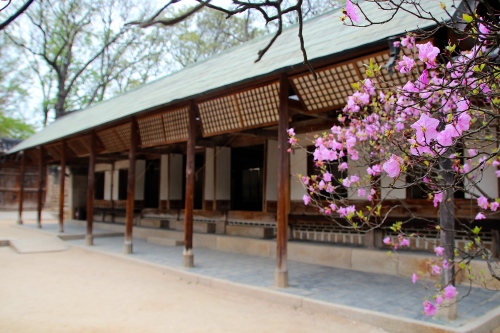 Secret Garden of Changdeokgung Palace 17