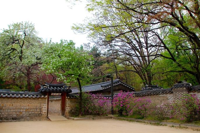 Secret Garden of Changdeokgung Palace 18