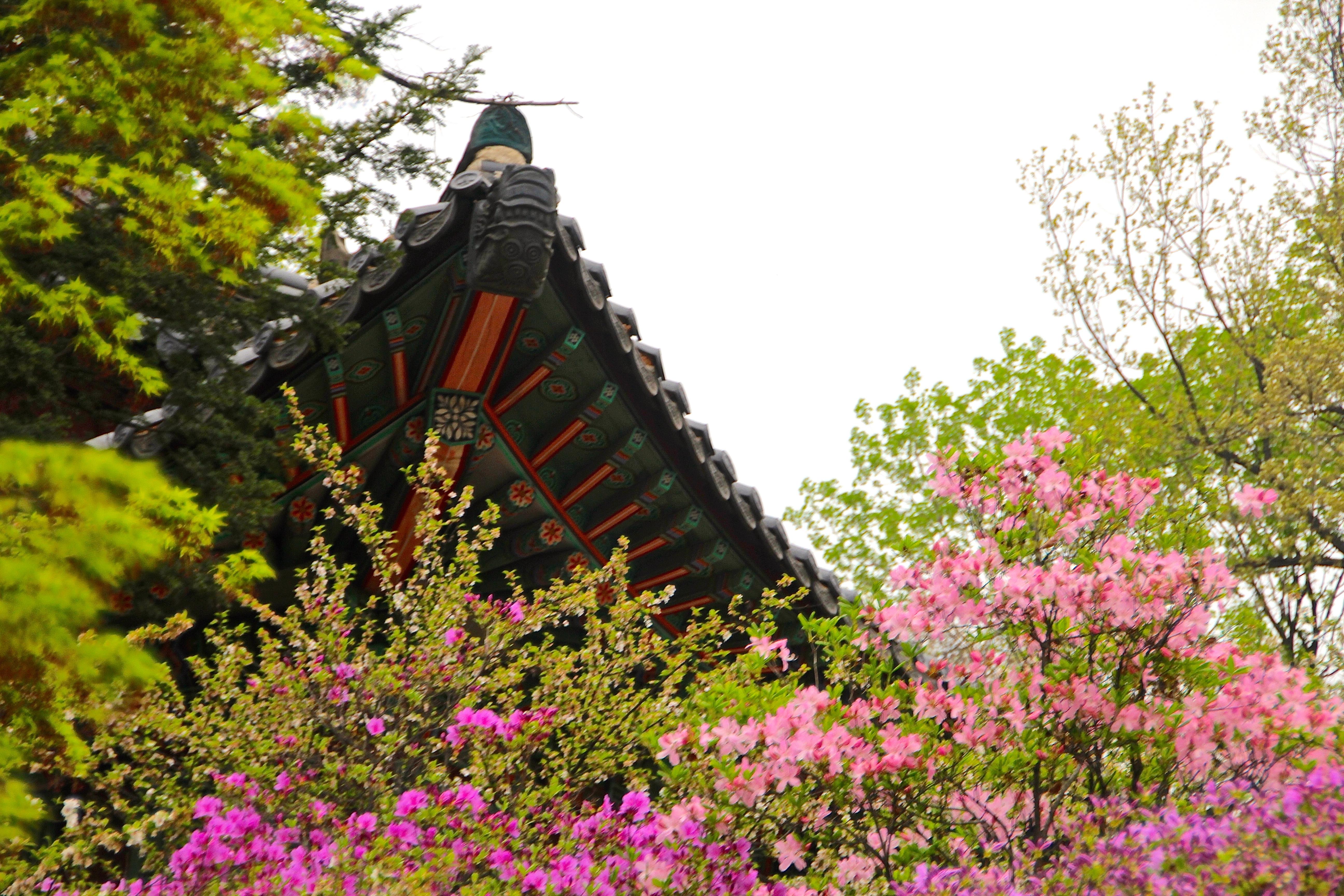 Secret Garden: Hiakus For NaPoWriMo: The Secret Garden Of Changdeokgung