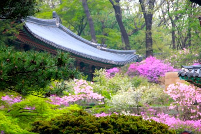 Secret Garden of Changdeokgung Palace 6