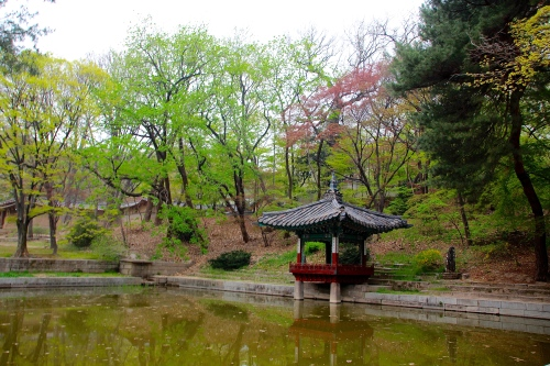 Secret Garden of Changdeokgung Palace 7