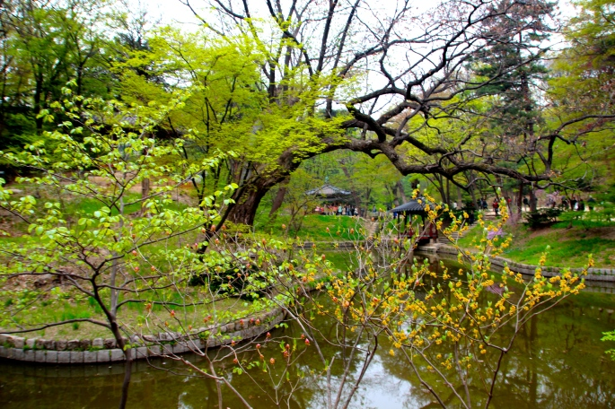 Secret Garden of Changdeokgung Palace 8