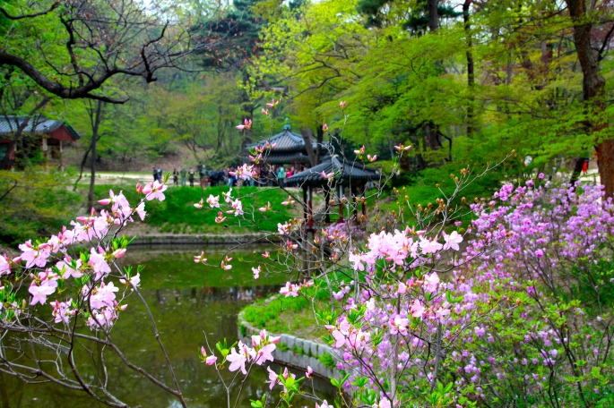 Secret Garden of Changdeokgung Palace 9