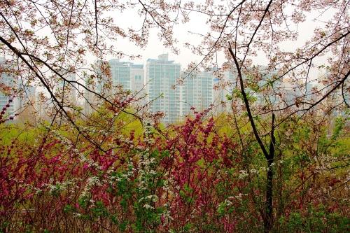 Tangled Glory of Spring near City