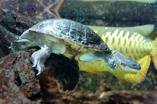 Turtle and Fish San Diego Zoo