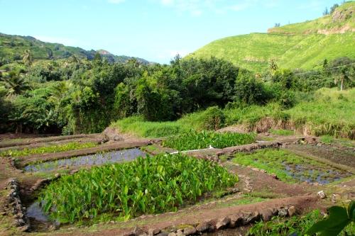 West Maui Coast 5