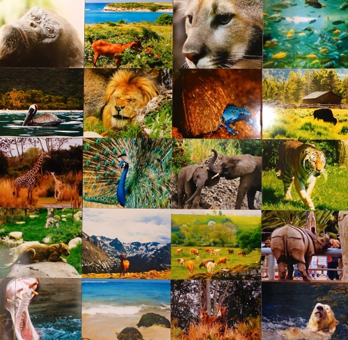 16 Exotic Animals copy