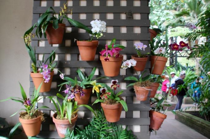 Balboa Park Orchids