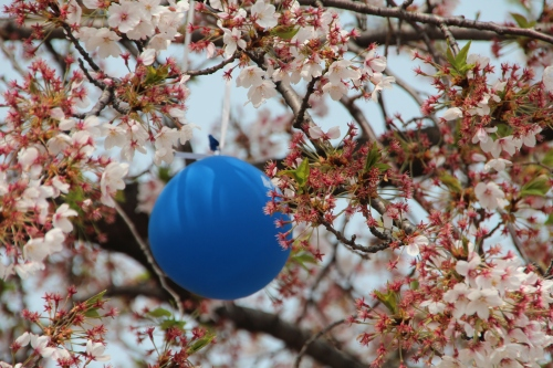 Balloon stuck in cherry tree