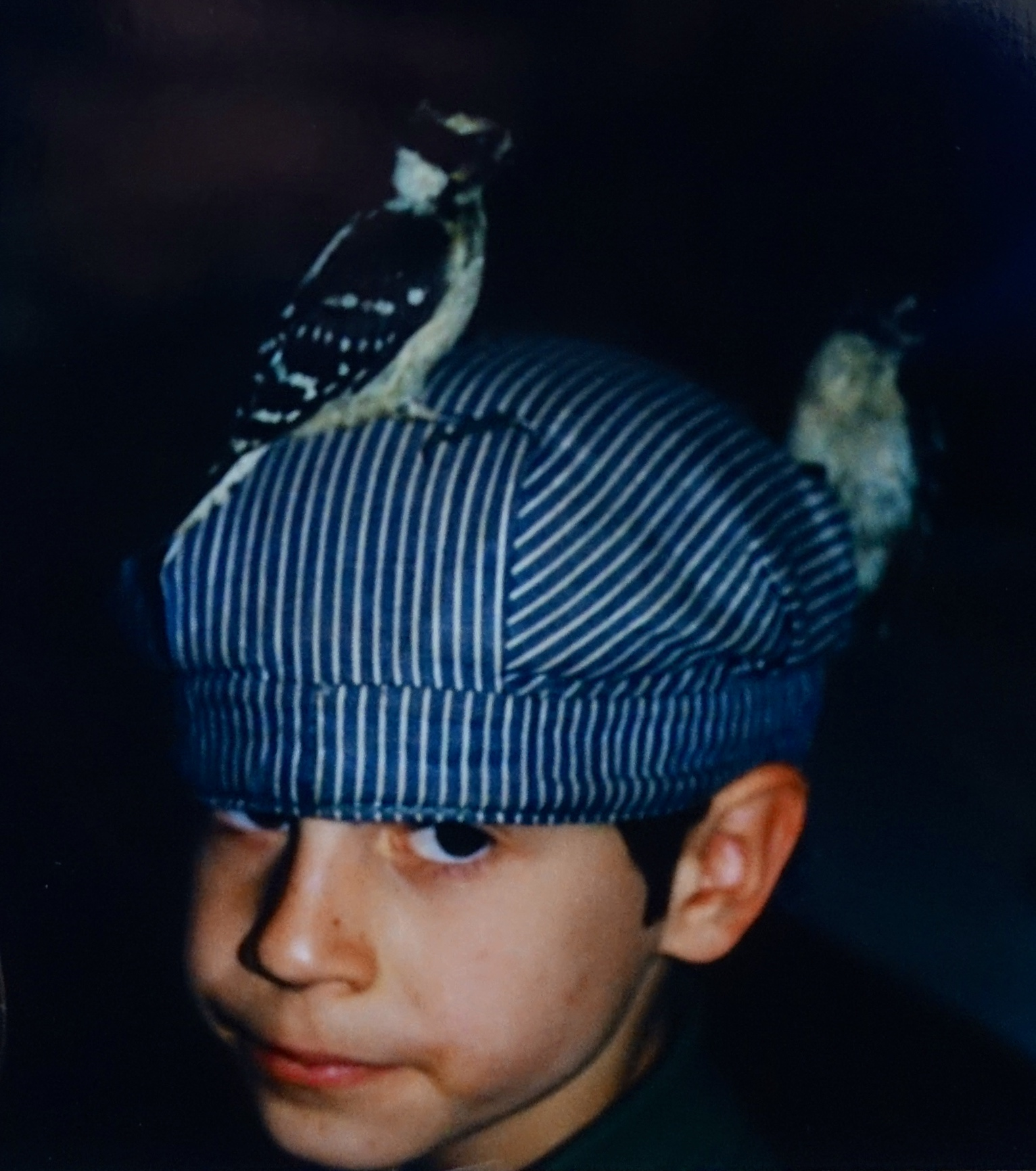 Boy with Downy Woodpeckers on his cap